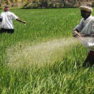 Urea consumption likely to remain sluggish: Indira Sec