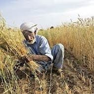 New interest subsidy scheme for farmers on anvil: RBI