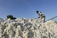 Consistent fall in arrivals number may support cotton price