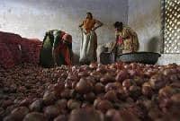 Govt hikes onion MEP to USD 500 per tonne