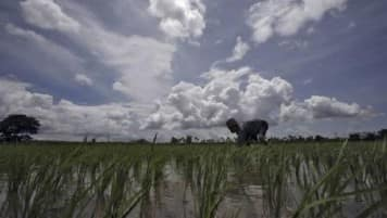 Exclusive: India expects better monsoon rains this year