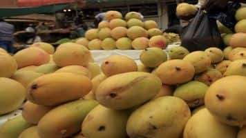 European Union lifts ban on import of mangoes from India