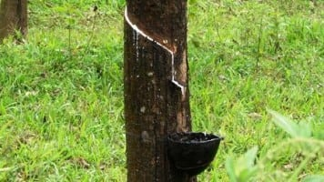 Fall in rubber prices: Kerala to take up issue with Centre
