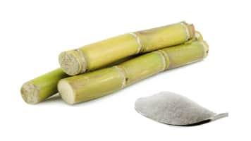 Sugar mills in Uttar Pradesh has produced 45.59 lac tons