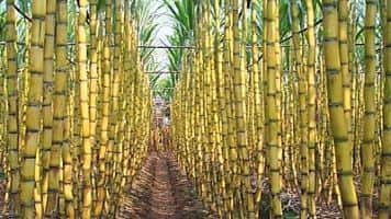 Below Rs 29, exit KCP Sugar: Prakash Gaba