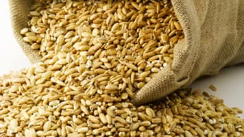 As per reports, Government could impose a 15% imprt tax on wheat by the mid of March