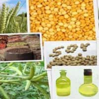 Buy Refined Soy oil, CPO on dips : Geofin Comtrade