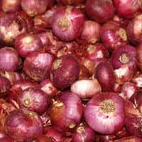 Onion exports fall to 1.21 lakh tonnes in Jan