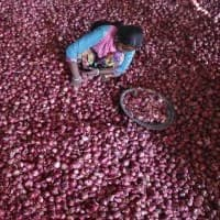 Onion exports climb 33% to Rs 2,362 cr in April-February