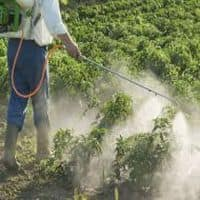Fake pesticides endanger crops and human health in India
