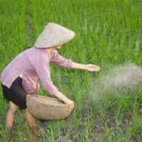 Fertilizer Min seeks Rs 12,500 cr for paying urea subsidy