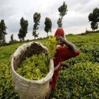 World Bank probes Tata Tea project over worker abuse