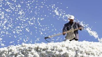 Sell Turmeric, Cocudakl, Soybean on pullback: Geofin