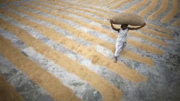 India signs biggest wheat import deals in over a decade