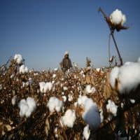 11 cos object NSAI's support for cotton seed price regulation