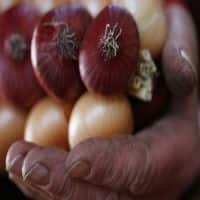 Wholesale onion prices hit lowest level of FY16 at Rs 9.50