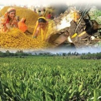 Expect Turmeric to trade sideways: Angel Commodities