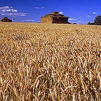 FCI sells 24.61 lakh tonnes wheat in April-September under OMSS