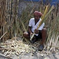 Indian sugar refiners can benefit from export tax