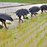 India's 2016 monsoon rains could fall below average: Sources