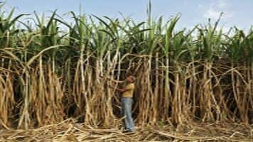 After strong rally, expert sees sugar price halting due to stock