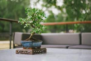 Bonsai plants: Bring the forest home
