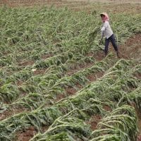 HDFC Ergo aims to maintain mkt share in crop insurance