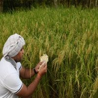 Govt needs to reduce risk, increase reward for farmers: Pro