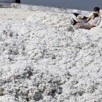 Expect Cotton futures to trade higher: Angel Commodities