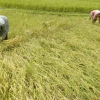 Farm debt waiver to put pressure on UP finances: Report