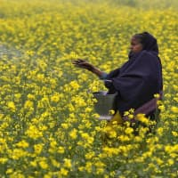 Govt makes change in urea policy to enable units produce more
