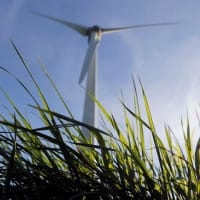 Suzlon Energy rises 2% on repeat 50.40 MW order