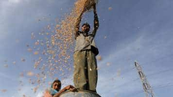 India's wheat imports rise above 5 mn tonne, biggest in decade