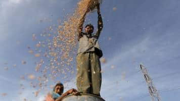 India likely soon to impose 25% wheat import tax: Sources