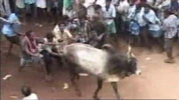 Jallikattu protests may dent PepsiCo & Coke sales by Rs 1400 cr
