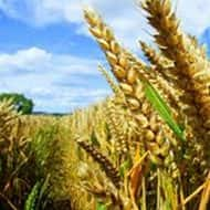 270 million ton foodgrain production expected this year: ICAR
