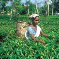Jayshree Tea looks attractive: Ashish Chugh