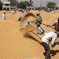 CCEA hikes paddy MSP by Rs 50 a qtl to Rs 1,360