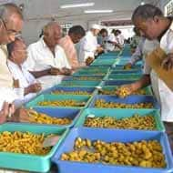 Expect Turmeric prices to trade on positive note: Karvy