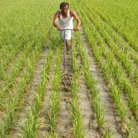Tackling the agri crisis: Experts discuss ways to alleviate farmer's pain