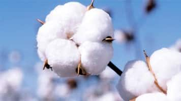 Cotton Market Update for the Week Ending Friday, December 7, 2018