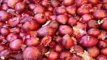 Onion prices fall below Rs 50 at Lasalgaon on export curbs