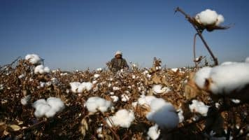 Venkaiah directs CCI to open 58 cotton purchasing centres