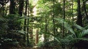 Maharashtra to get Rs 2,000 cr for forest conservation