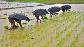 Insurance cos refuse extending deadline for crop premium