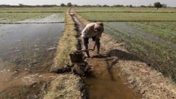 Rs 1,269 crore assistance for crop damage to Maharashtra