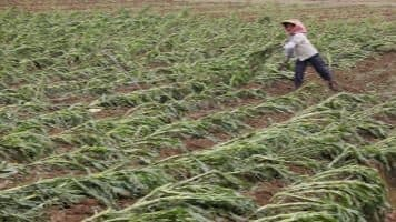 Crop losses to be on top of agenda of special cabinet meeting